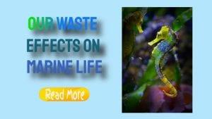 waste effects on marine life