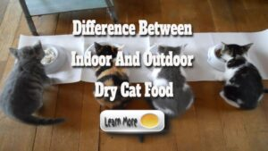 Difference Between Indoor And Outdoor Dry Cat Food